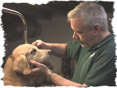See that sweet smile on Darcy's face as Groomer Greg works so diligently.