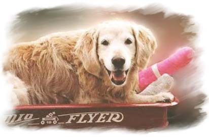 Bailey being transported in her wagon after breaking her foot and needing a cast.
