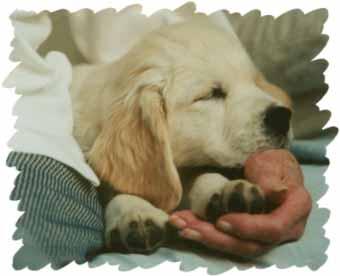 loving handful